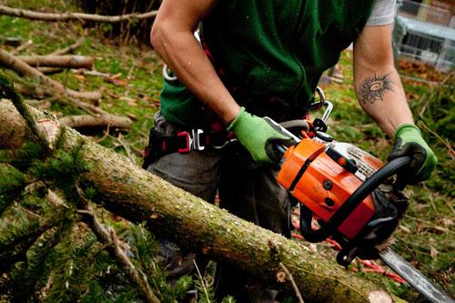 Artur Socher schneidet Brennholz mit der Motorsäge zurecht