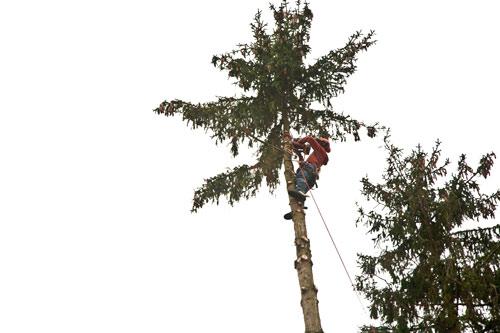 Aaaron Althammer mit Seiklettertechnik weit oben am Baum
