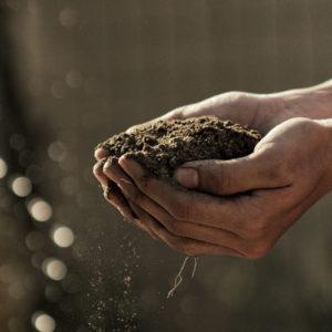 Gartenerde die in der Hand gehalten wird